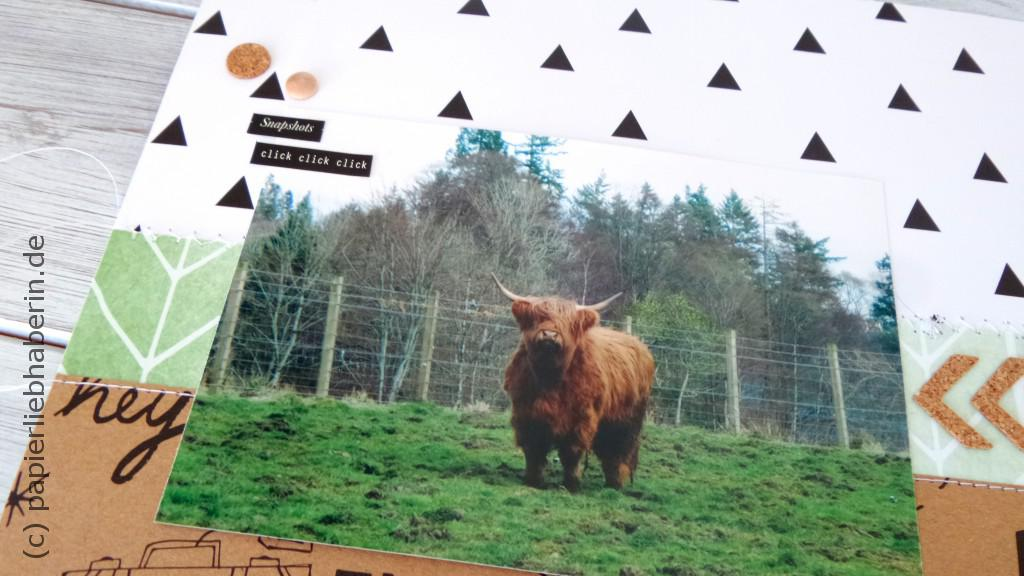 Highland Cattle_Layout_Detail I
